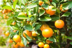 orange2